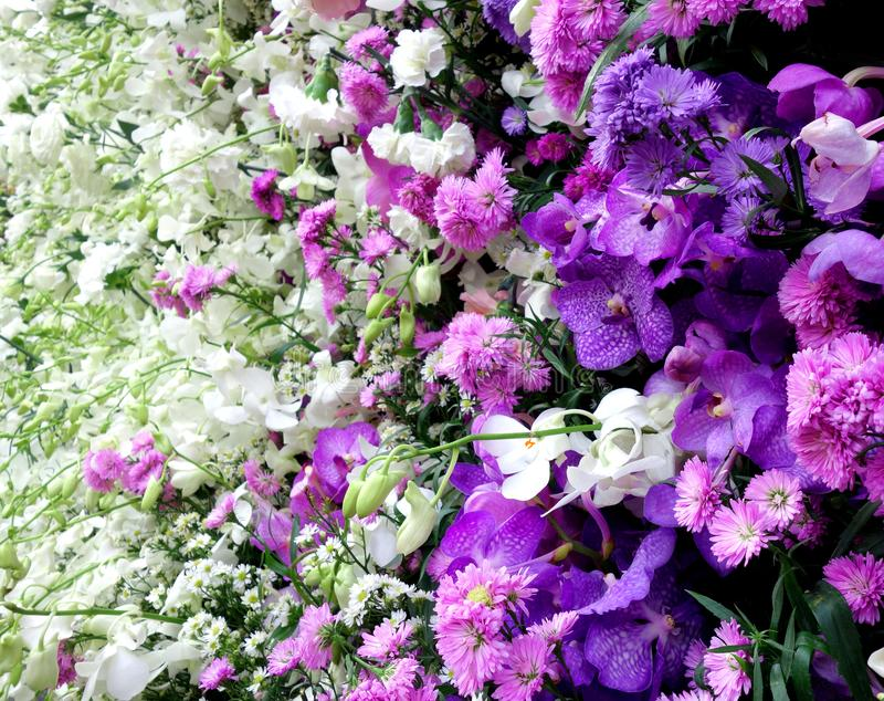 Purpere en Witte Serie van Bloemenachtergrond royalty-vrije stock afbeeldingen