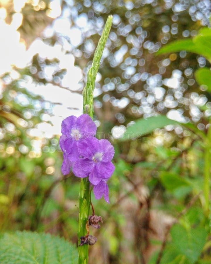 Purpere flora in de avond royalty-vrije stock foto