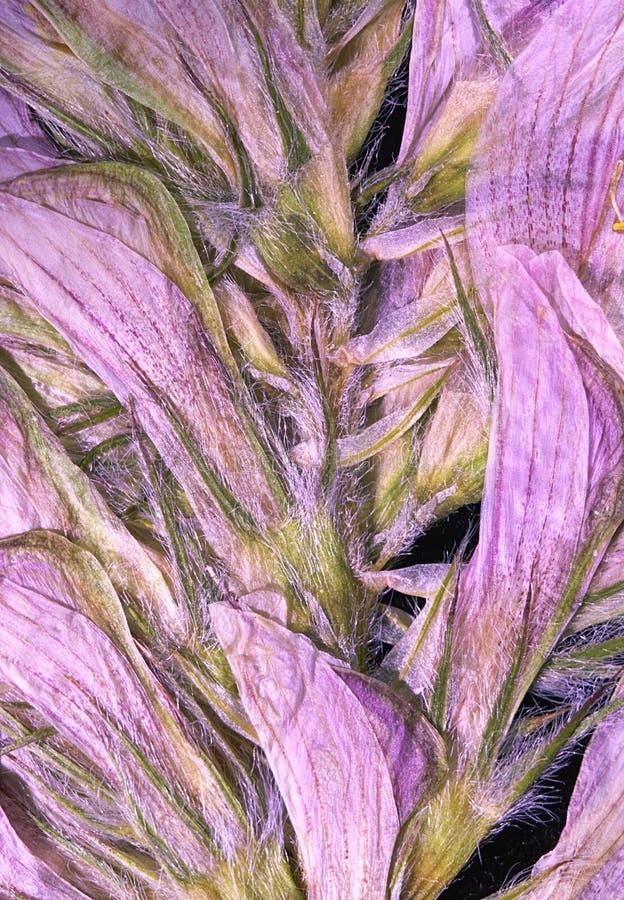 Purpere gedrukte bloem stock foto