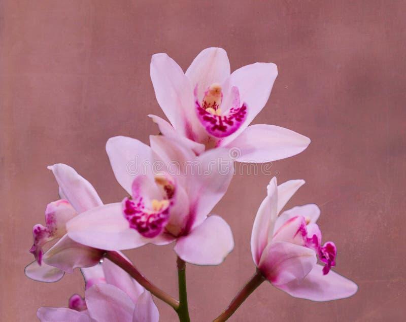 Purpere Geweven Orchideeën stock foto