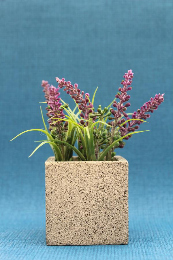 Purpere Heather Plant Concrete Pot stock foto's