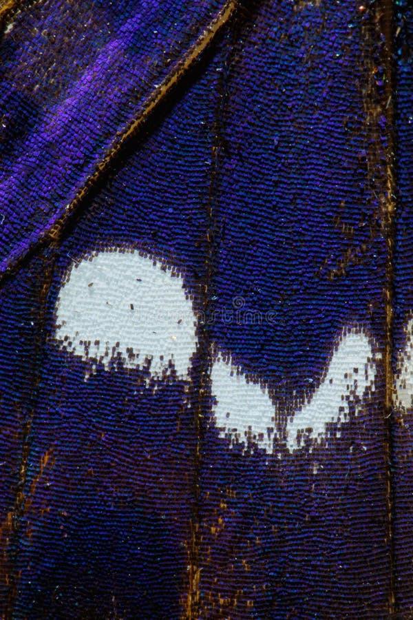 Purpere Keizer, Apatura-de vleugelpatroon van de irisvlinder stock afbeeldingen