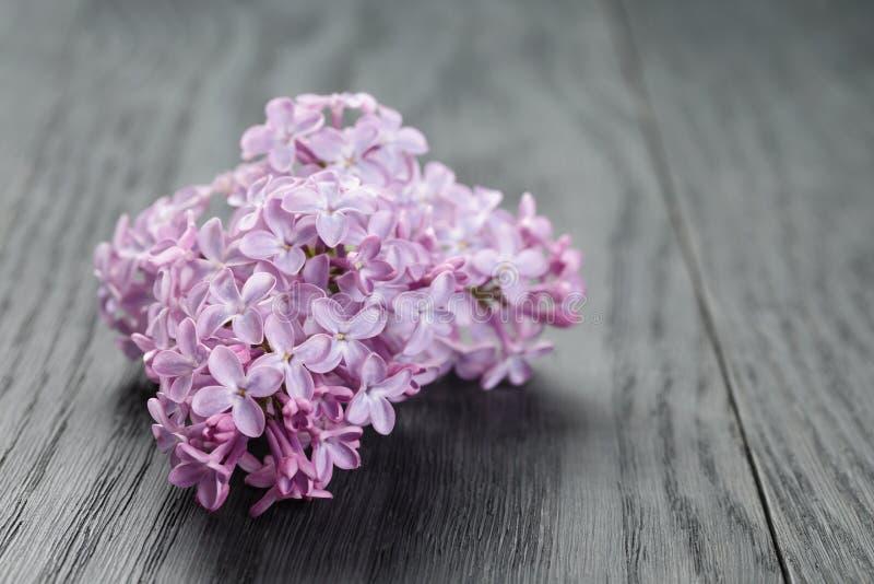 Purpere lilac bloem over houten lijst stock fotografie