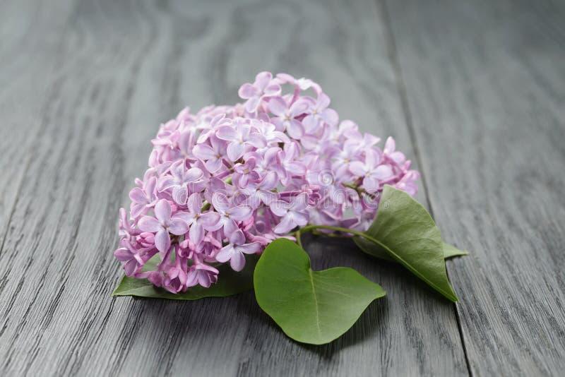 Purpere lilac bloem over houten lijst stock afbeelding