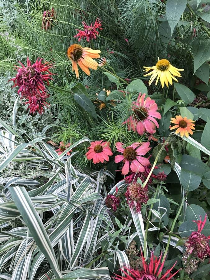 Purpere oranje en rode coneflowers lange bloemen in de Stad van New York royalty-vrije stock foto's
