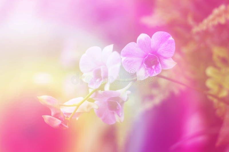 Purpere orchideeën royalty-vrije stock afbeelding
