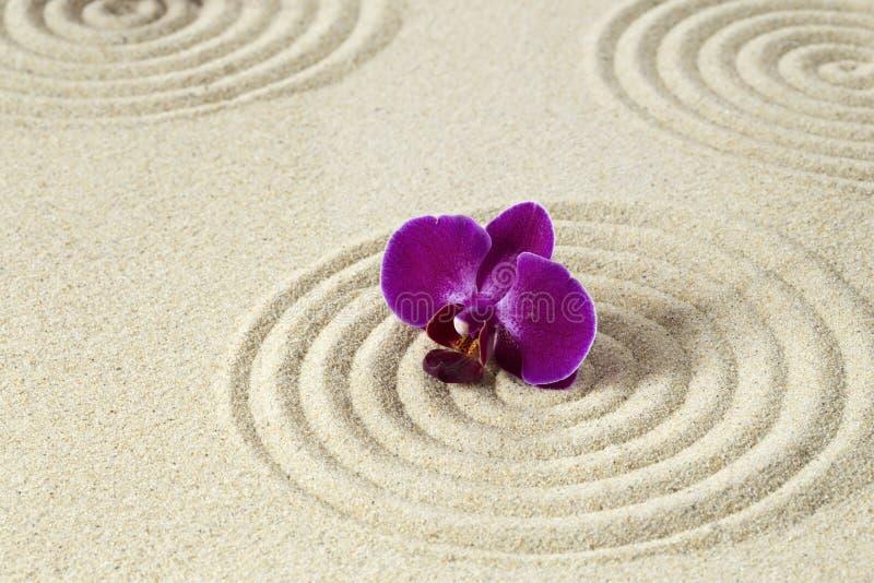 Purpere orchidee op zandpatroon royalty-vrije stock foto