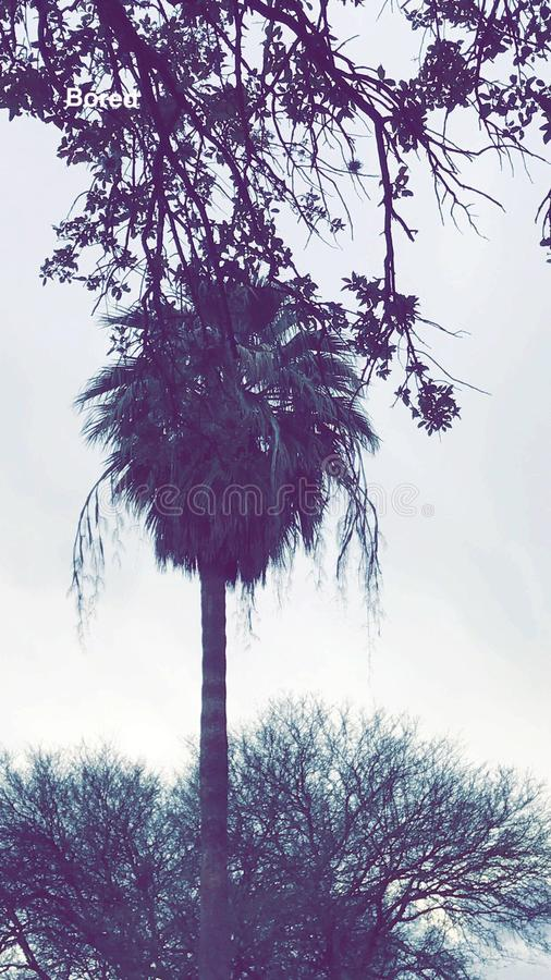 Purpere Palm stock foto