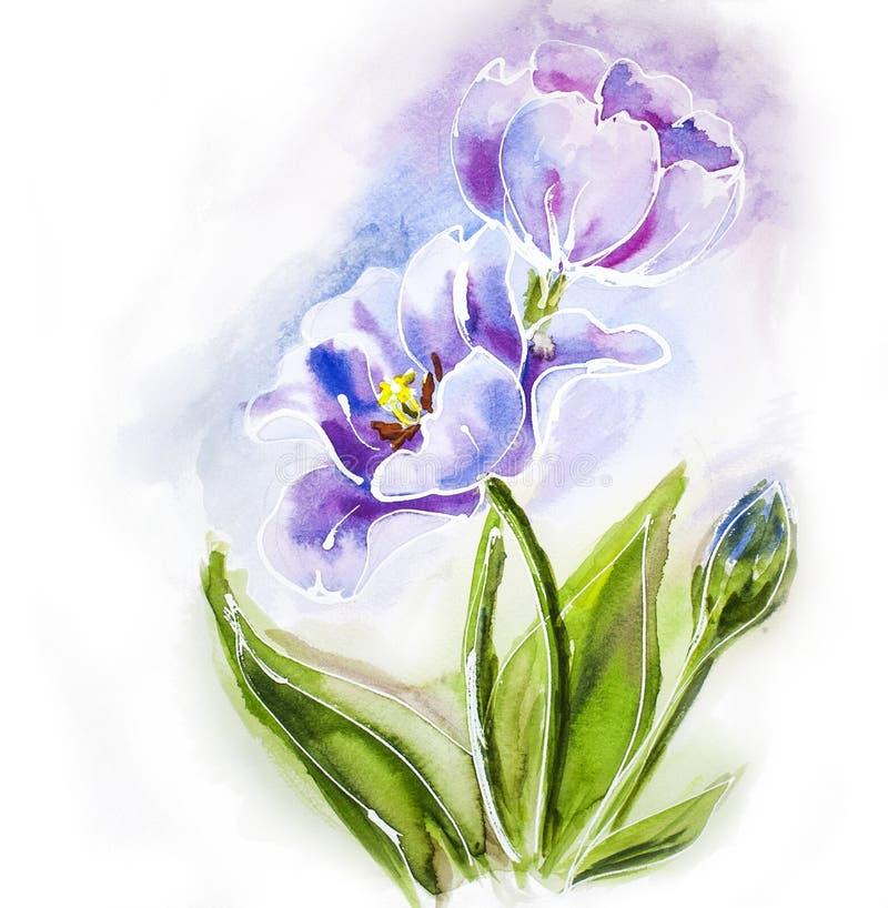 Purpere tulpen, waterverf het schilderen. royalty-vrije illustratie