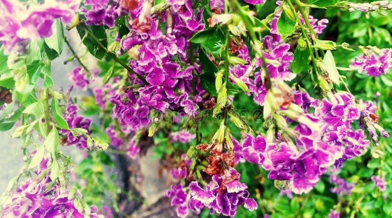 Purpere violette bloemen royalty-vrije stock afbeelding