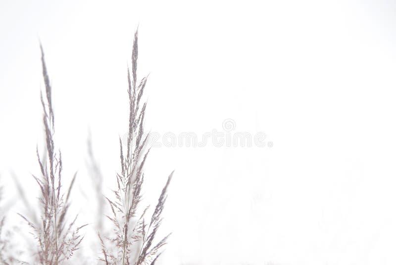 Purpere wilde bloem met exemplaarruimte voor achtergronddoeleinden royalty-vrije stock afbeeldingen