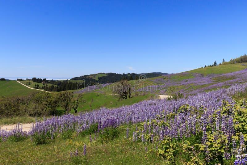 Purpere wildflowers langs een landweg stock foto's