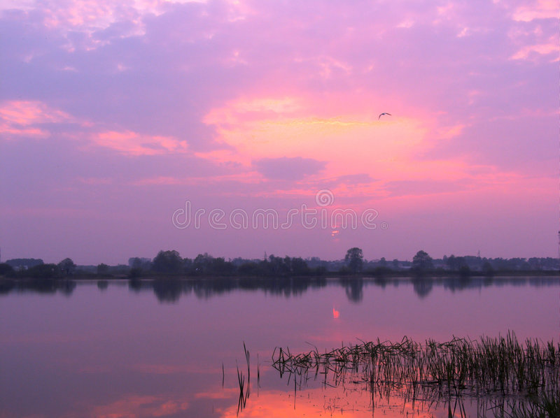 Purpere zonsondergang stock fotografie