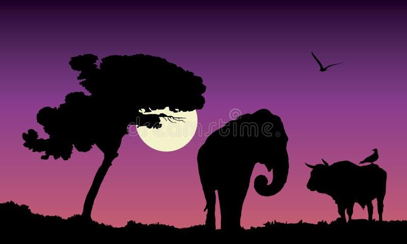 Purpere zonsondergang over Afrika, vectorillustratie