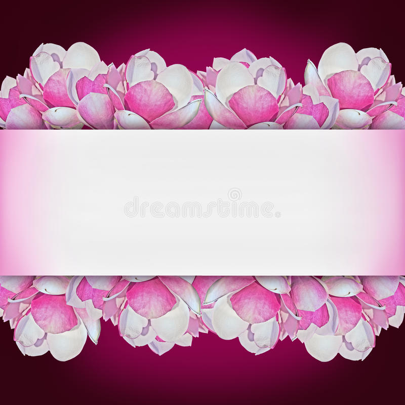 Purple background with pink magnolia. Square purple background with pink magnolia flowers and copy space in the middle stock image