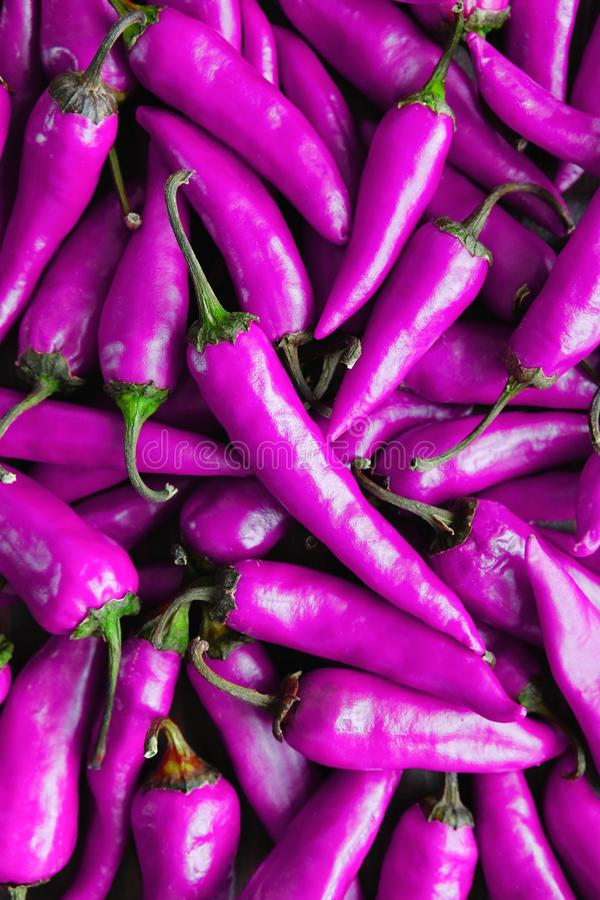 Purple background or texture of chili peppers royalty free stock image
