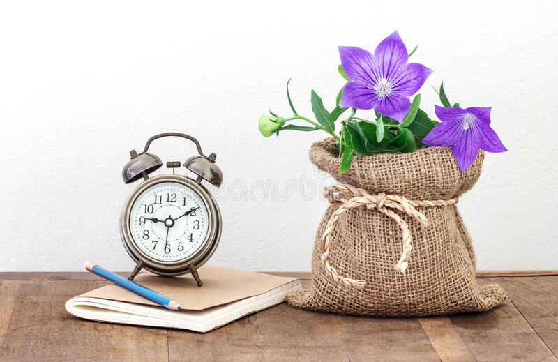purple balloon flower or Platycodon grandiflorus flower in burlap pot ,a vintage alarm clock and books on wooden table with cop stock photos