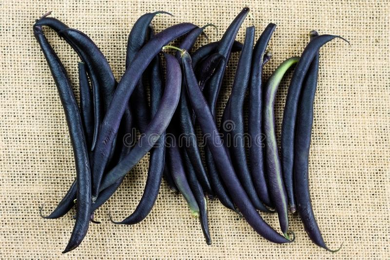 Purple bean pods haricot on a linen fabric. Legumes harvest royalty free stock photos