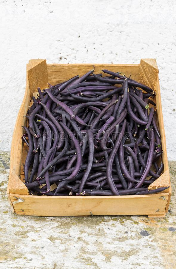 Purple beans in a wooden vegetable box in a sunny day. Purple beans in a wooden vegetable box royalty free stock photography