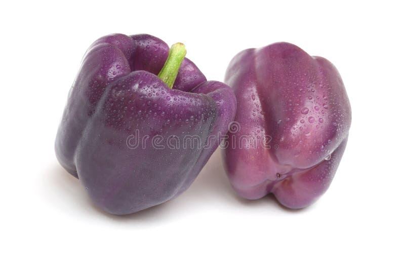 Purple Beauty Pepper stock image