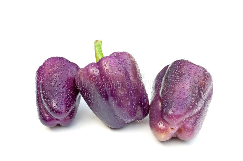 Purple Beauty Pepper royalty free stock images