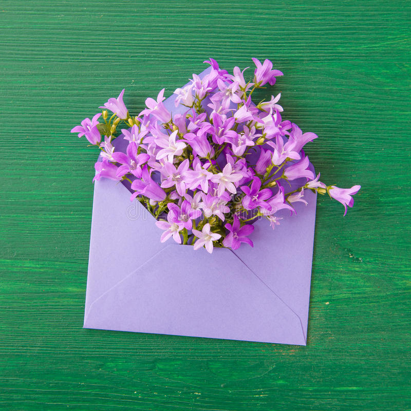 Purple bellflowers with envelope stock photography