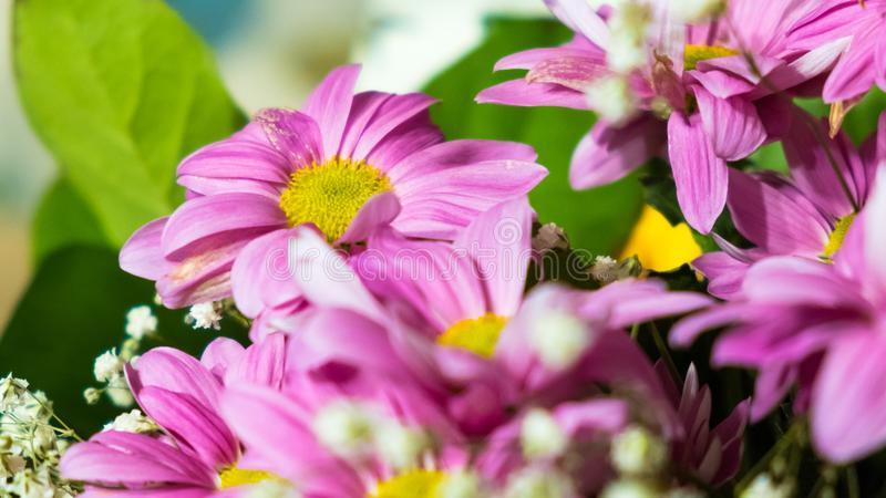 Purple big flowers in colorful summer garden royalty free stock image