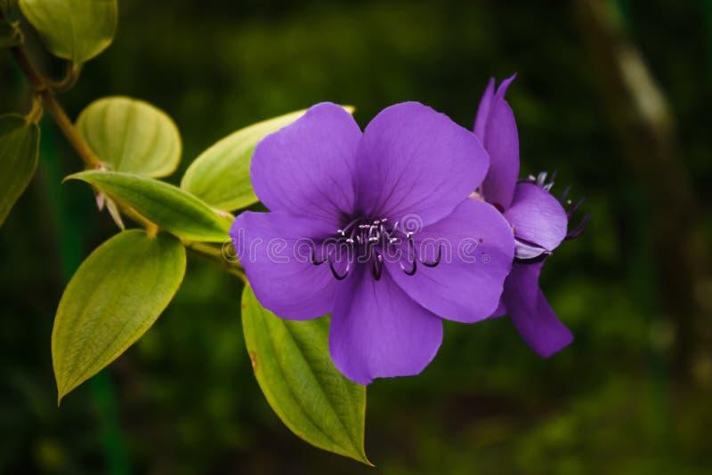 A Purple Blossom Free Public Domain Cc0 Image