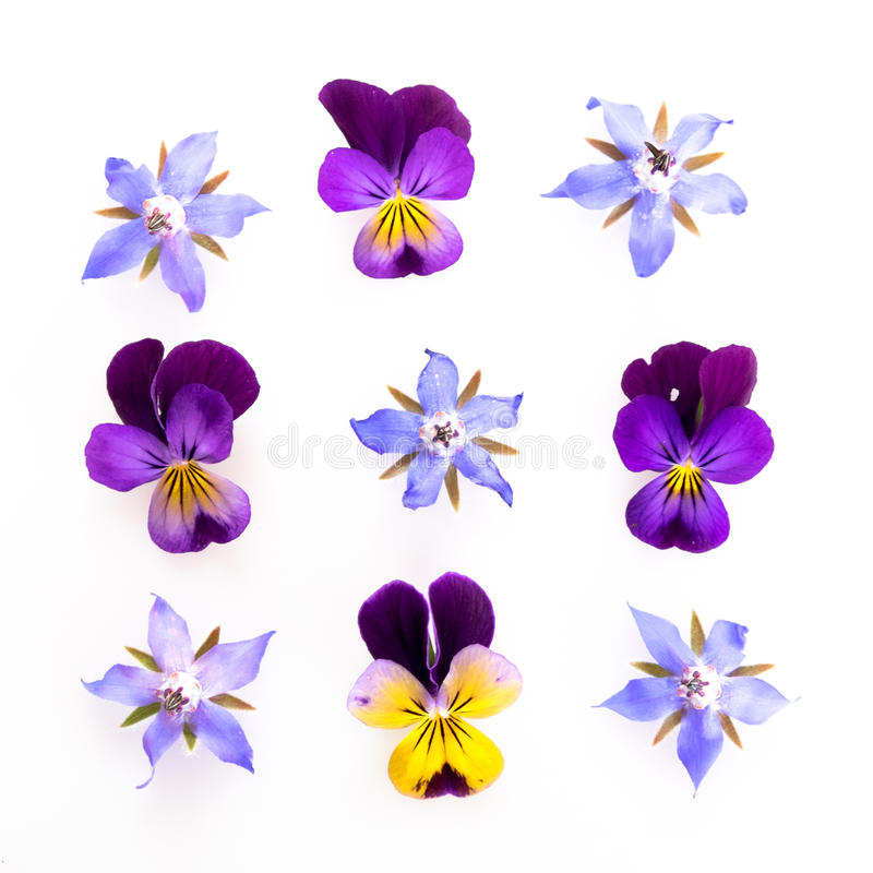 Purple and blue edible flowers stock images