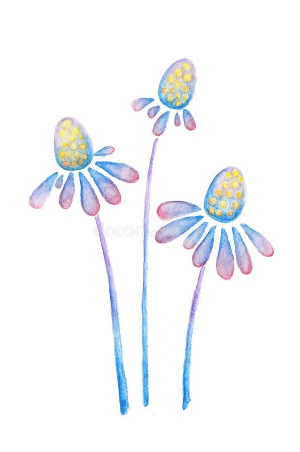 Purple blue flowers of echinacea watercolor pencils drawing. Purple blue daisy flowers of echinacea watercolor pencils drawing on white vector illustration