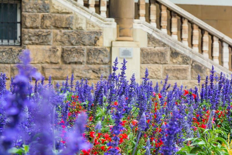 Purple Blue Flowers Lavendar Lilac Field Garden European City royalty free stock photos
