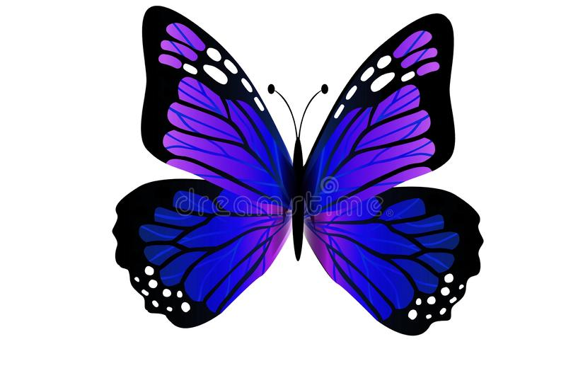 Purple butterfly, isolated on white background. Illustration design stock photo