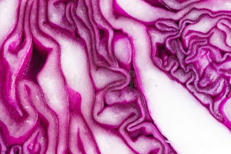 Purple cabbage closeup royalty free stock photo