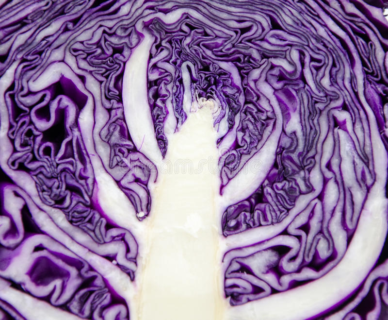 Purple cabbage internal texture royalty free stock images
