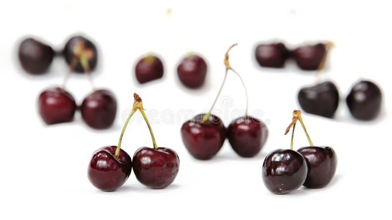 Purple Cherry Free Public Domain Cc0 Image