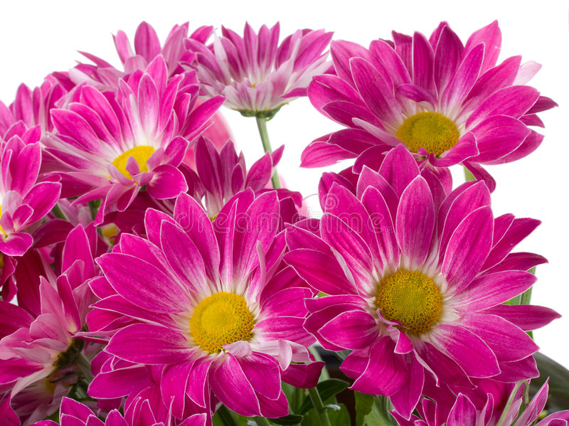 Download Purple Chrysanthemum Bouquet Stock Photo - Image: 7655686