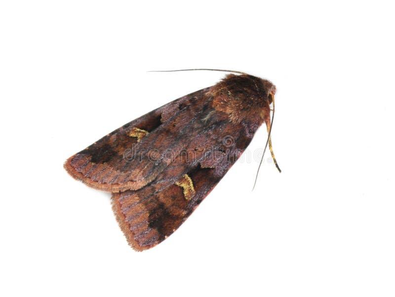 Purple clay moth royalty free stock photo
