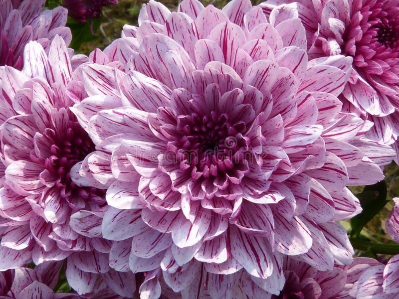Purple Cluster Petal Flower Free Public Domain Cc0 Image