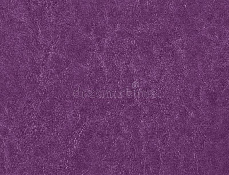 Purple color leather texture royalty free stock image