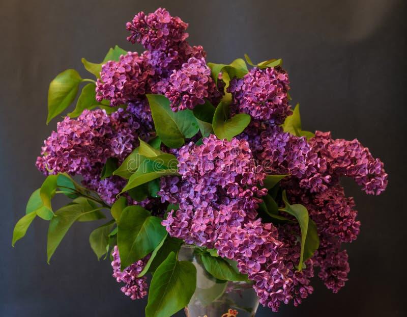 Purple common lilac (syringa) in vase on black background. Stock photo royalty free stock photos