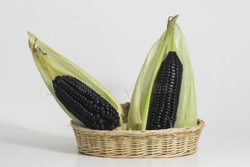 Purple corn still life. Purple corn is a typical ingredient of Peruvian food. When boiled in water, it produces a purple liquid rich in starch, which is called royalty free stock photos