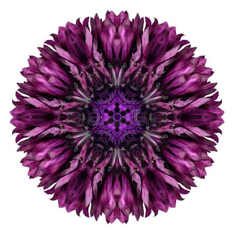 Free Purple Cornflower Mandala Flower Kaleidoscope Isolated On White Royalty Free Stock Images - 45976599