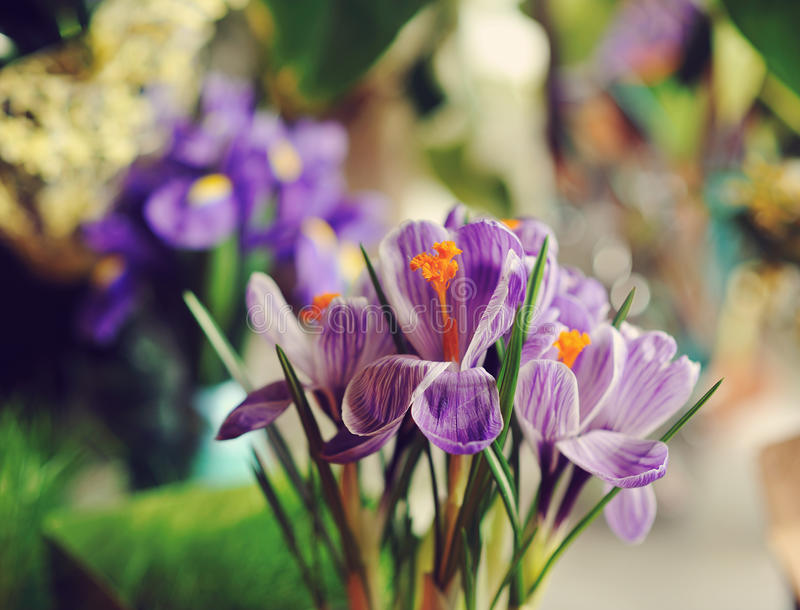 Download Spring Flowers stock photo. Image of design, bloom, natural - 29730228