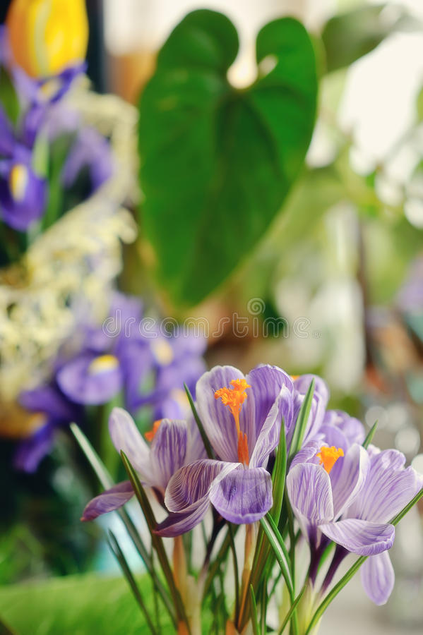 Download Spring Flowers stock image. Image of lilac, grass, flower - 29730251