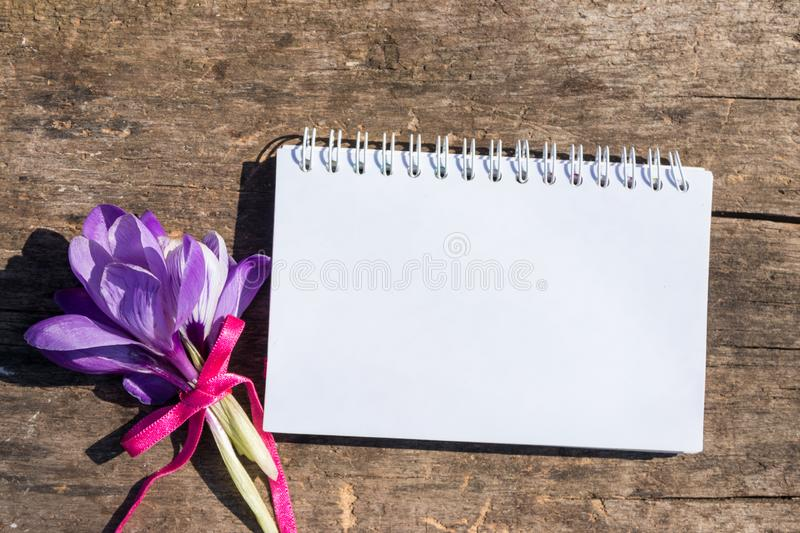Purple crocus flowers and blank notepad on rustic wooden background stock image