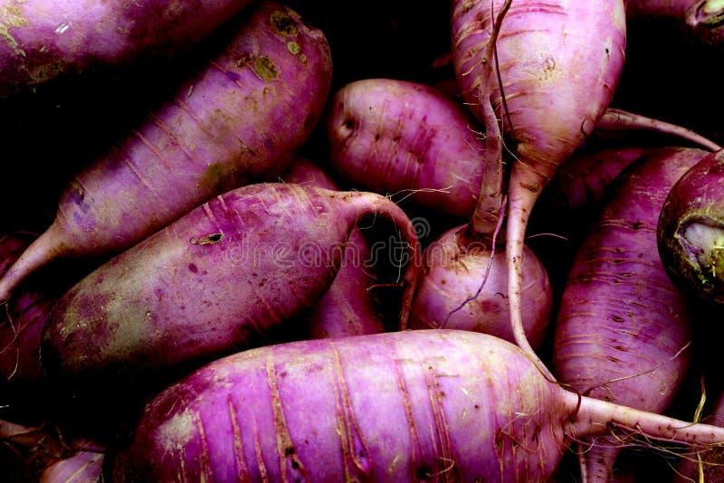 Purple Daikon Radishes stock photography