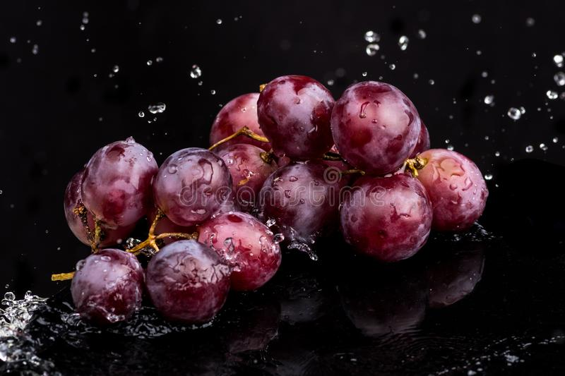 Purple dark close-up of grapes with a reflection on white and black background in a spray of water.  royalty free stock image