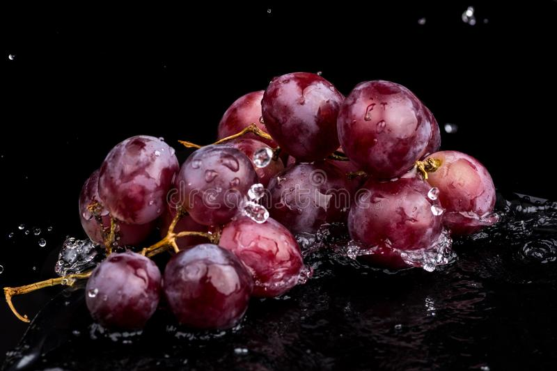 Purple dark close-up of grapes with a reflection on white and black background in a spray of water.  stock photography