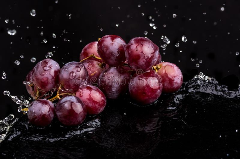 Purple dark close-up of grapes with a reflection on white and black background in a spray of water.  royalty free stock images