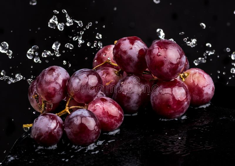 Purple dark close-up of grapes with a reflection on white and black background in a spray of water.  stock images